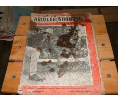 İLKSAHAF&BROILER GROWING-JULY 1956